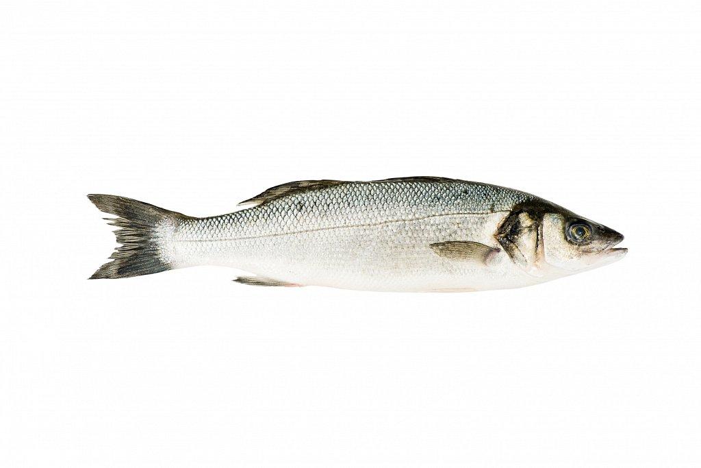 Предметная фотосъемка свежей рыбы для торговой сети. Волгоград